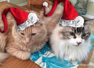 puppycat dustie santa christmas