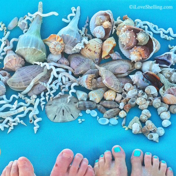 Finding Seashells on Clearwater Beach