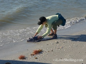 saving a surf scoter bird sanibel island florida