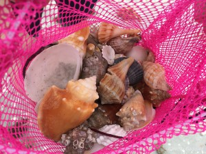 seashells in a pink bag