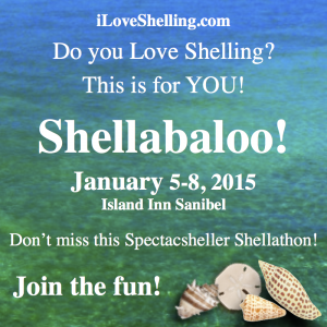 shellabaloo-square