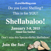 Sanibel Shellabaloo