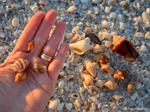 Collecting seashells at Gulfside City Park beach Sanibel