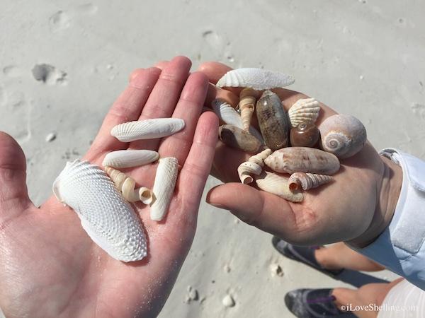 Shelling Trip Shellicious Sea Gems