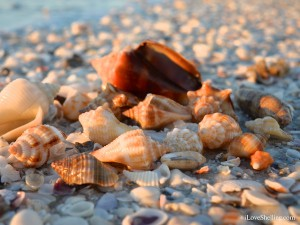 closeup shells on the beach