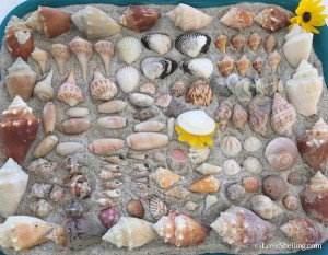 patchwork shells