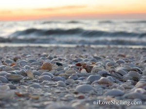 sanibel shoreline at dawn