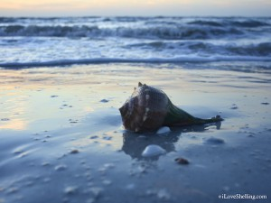 seashell and waves at blue dawn