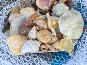 seashells in white shell net
