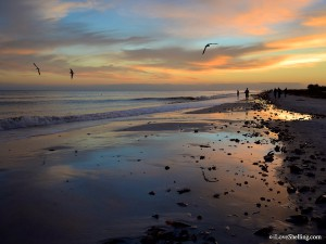 shells, birds and sunset on Sanibel
