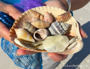 shells within a shell