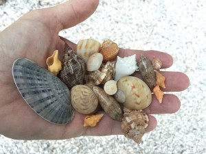 some of Clarks shell finds