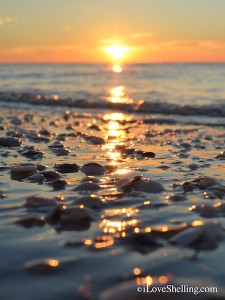 sunrise over sanibel shells