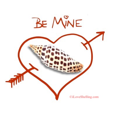Be Mine Junonia Valentine Shellentine