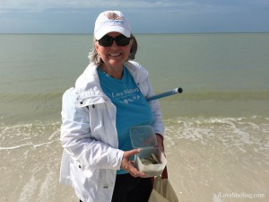 Diane finds sand dollars with iloveshelling gear