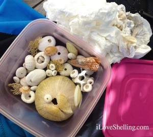 Packing urchins for travel