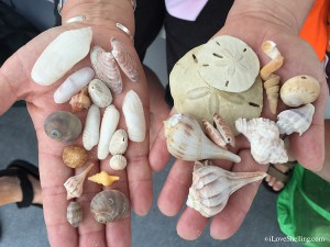 Seashells found from Bonita Springs Florida