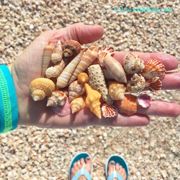 Beach Love And Seashells