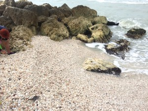 Shells build up at Blind Pass Captiva at jetty
