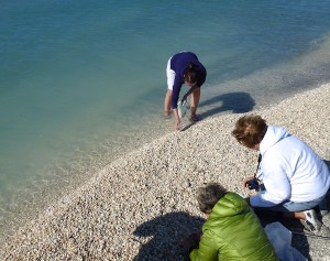 collecting seashells on Captiva Island Florida after cold front