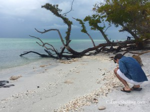 Collecting sea shells on Cayo Costa Island Florida