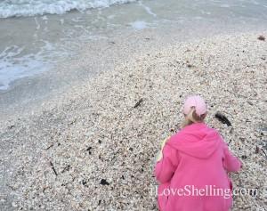 pink sheller in shell pile