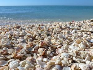 sand water and shells
