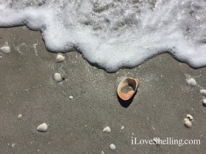 shells in the sand with ocean wave