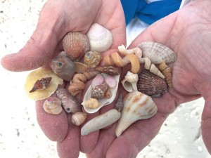 variety of mini seashells found with Pam Rambo shelling trip