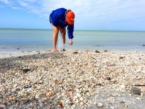 Collecting Florida shells and beach bling in March on Captiva Cruises