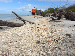 Finding Florida sea shells on Cayo Costa Island with Pam Rambo