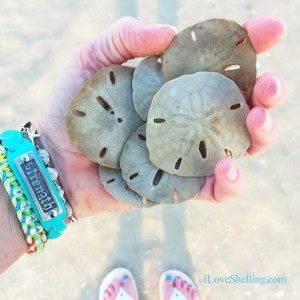 Fist full of dollars. Sand dollars, that is