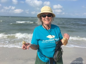 Mary finds horseshoe crabs