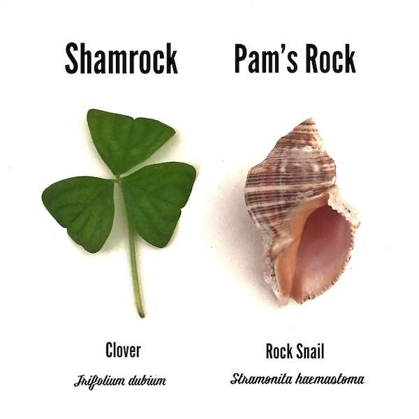 St Patricks Day Shamrock Pams Rock