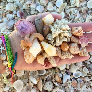 colorful captiva shells and bling