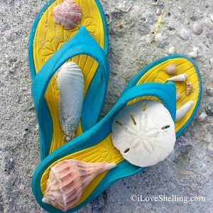 flip flops and seashells