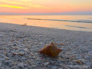 sanibel sunrise with shells
