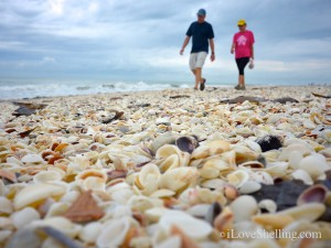 Beach combing on shell filled Sanibel shore line