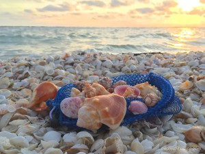 Beach find shells at sunset