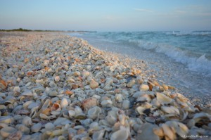 Bowman Beach filled with sea shells
