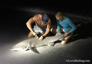 Elliot Sudal Shark wrestler tagging lemon shark with Pam Rambo