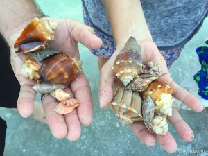 Hands finding shells at Blind Pass Sanibel