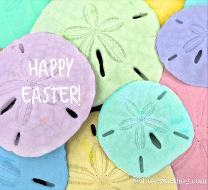 Happy Easter with dyed sand dollars