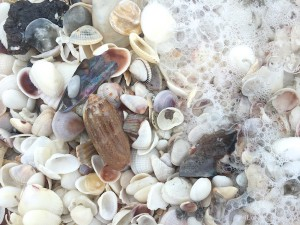 Olive among sea shells and waves