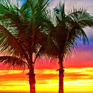 Palm Trees at sunrise on Sanibel