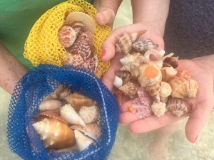 Sanibel beach shell finds