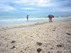 Sanibel beach with lots of shells
