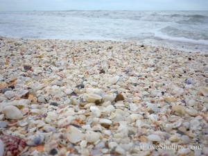 Seashell beach on Sanibel Island