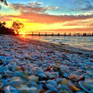 Seashells sunset on the dock of Sanibel bay