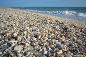 Shell beach on Sanibel Island Florida